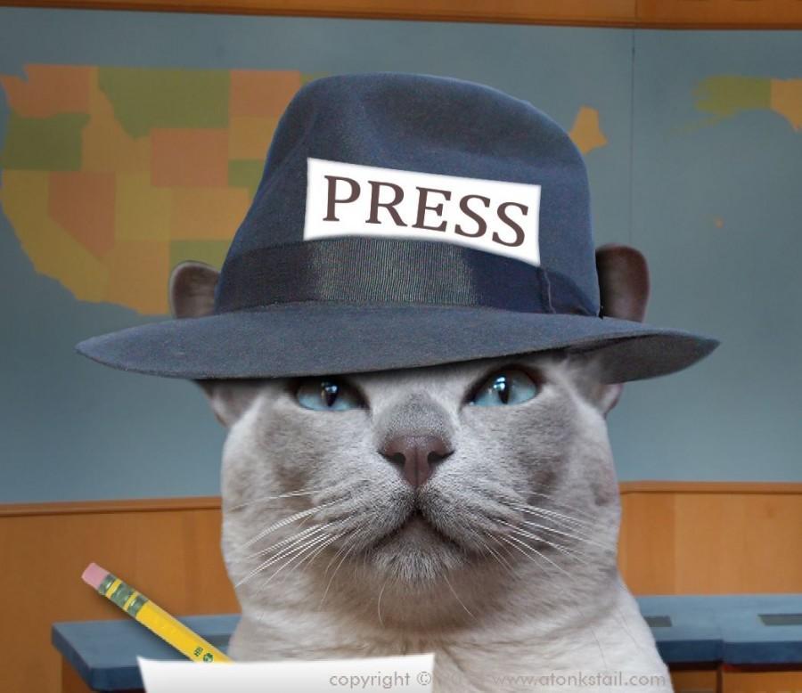 reporter cat