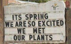 Springtime Puns