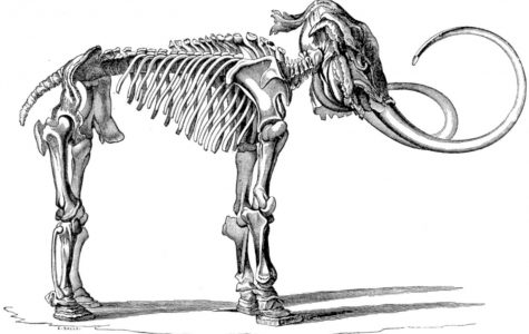 Chelsea History Series: A Mammoth Find