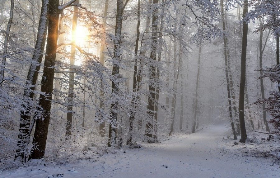 Tips and Tricks for Another Michigan Winter